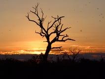 заход солнца национального парка mosquitoe chobe Ботсваны Стоковые Фотографии RF