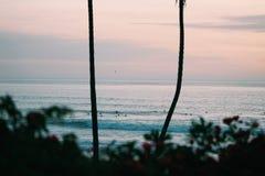 Заход солнца на пляже с заводами и пальмой стоковые фотографии rf