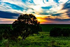 Заход солнца на предпосылке русских лугов стоковое фото