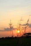 Заход солнца на силуэте поля стоковые фото