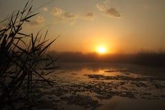 Заход солнца на топи Стоковые Фотографии RF