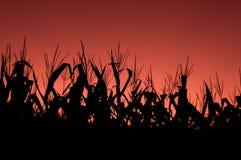 заход солнца неба поля мозоли красный Стоковое Изображение