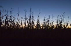 заход солнца нивы Стоковая Фотография