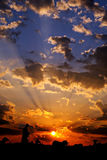 заход солнца овец Стоковая Фотография