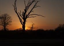 Заход солнца Оклахомы с мертвым деревом Стоковое Фото