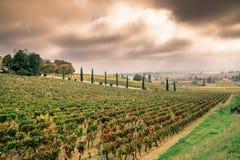 Заход солнца осени на виноградниках вокруг Святого-Emilion с виноградиной холмов Стоковые Изображения