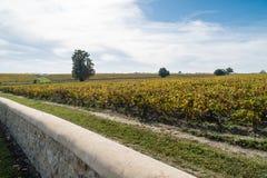 Заход солнца осени на виноградниках вокруг Святого-Emilion с виноградиной холмов Стоковые Фотографии RF