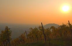 Заход солнца осени холмов виноградников вина Moscato Стоковое Изображение