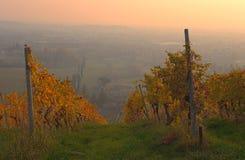 Заход солнца осени холмов виноградников вина Moscato Стоковые Фото