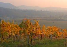 Заход солнца осени холмов виноградников вина Moscato Стоковые Изображения