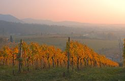 Заход солнца осени холмов виноградников вина Moscato Стоковые Фотографии RF