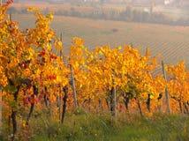 Заход солнца осени холмов виноградников вина Moscato Стоковая Фотография RF
