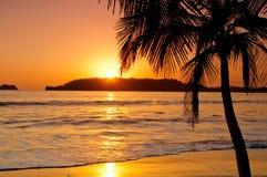 Заход солнца пальмой в пляже Стоковые Изображения