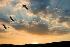 заход солнца полета к Стоковая Фотография
