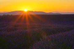 Заход солнца поля лаванды стоковые фото