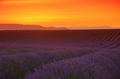 Заход солнца поля лаванды стоковое фото rf