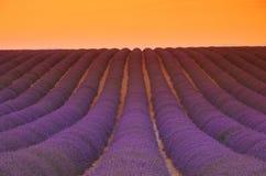 Заход солнца поля лаванды стоковые фотографии rf