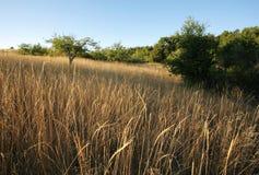 заход солнца поля мирный стоковая фотография rf