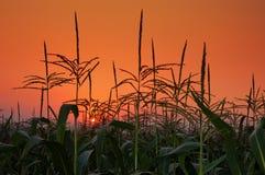 заход солнца поля предпосылки Стоковое Изображение