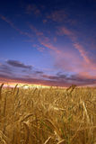 заход солнца поля Стоковое Фото