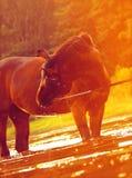 заход солнца портрета лошади волшебный Стоковые Фотографии RF