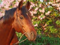 заход солнца портрета лошади цветка backg красивейший Стоковая Фотография RF
