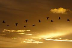 заход солнца предпосылки Стоковые Изображения