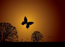 заход солнца природы бабочки иллюстрация вектора