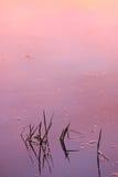 заход солнца пруда Стоковое Изображение RF