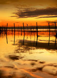 заход солнца птицы Стоковая Фотография