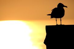 заход солнца птицы Стоковые Фотографии RF