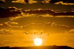 заход солнца птиц Стоковое фото RF