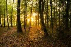 заход солнца пущи Стоковые Изображения RF