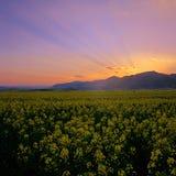 заход солнца рапса полей Стоковая Фотография RF