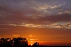 Заход солнца, розовые облака и деревья силуэта стоковые фотографии rf