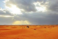 заход солнца Сахары пустыни вышесказанного Марокко стоковая фотография rf