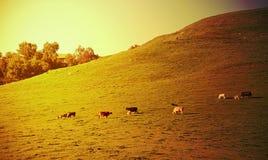 заход солнца сельскохозяйствення угодье Стоковые Фото