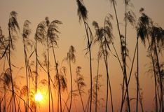 заход солнца силуэта листва стоковые фотографии rf
