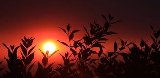 заход солнца силуэта листьев Стоковые Изображения