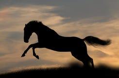 заход солнца силуэта лошади Стоковые Изображения RF