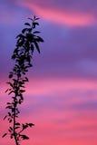заход солнца силуэта Стоковая Фотография