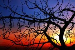 заход солнца смоквы Стоковые Изображения RF