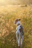 заход солнца собаки стоковые фотографии rf