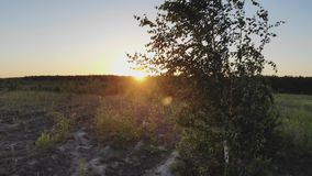 Заход солнца солнечный над лесом сток-видео
