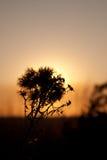 заход солнца солнца цветка светлый Стоковая Фотография