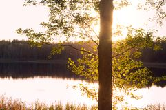 Заход солнца, солнце отраженное в воде, солнце выходить деревья Стоковое фото RF