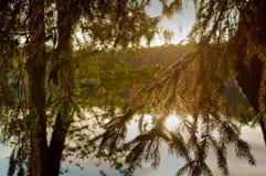 Заход солнца, солнце отраженное в воде, солнце выходить деревья Стоковые Изображения