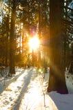 Заход солнца Солнце с естественным солнечным светом и лучи Солнця через деревья в w Стоковые Изображения