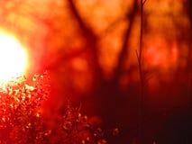 Заход солнца со светами и полевыми цветками осени стоковое фото rf