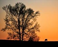 заход солнца страны Стоковые Изображения